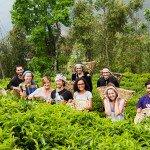 Як я працювала на чайній плантації у Непалі