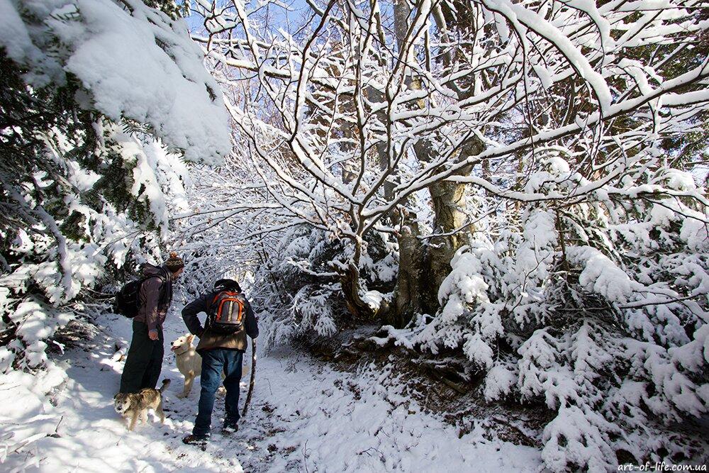 парашка взимку, сколе, зимові карпати