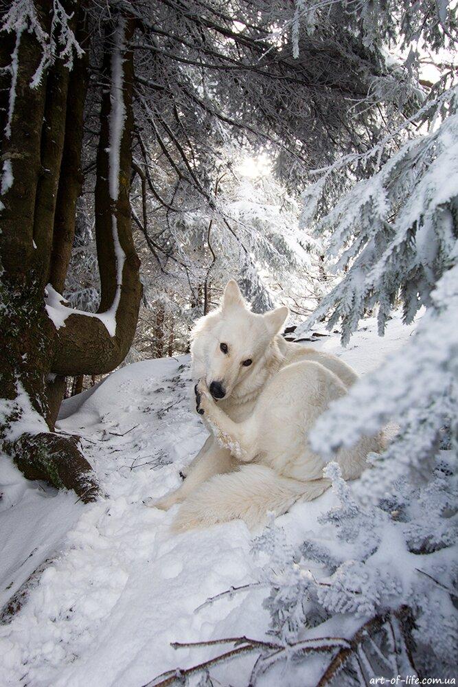 парашка взимку, сколе