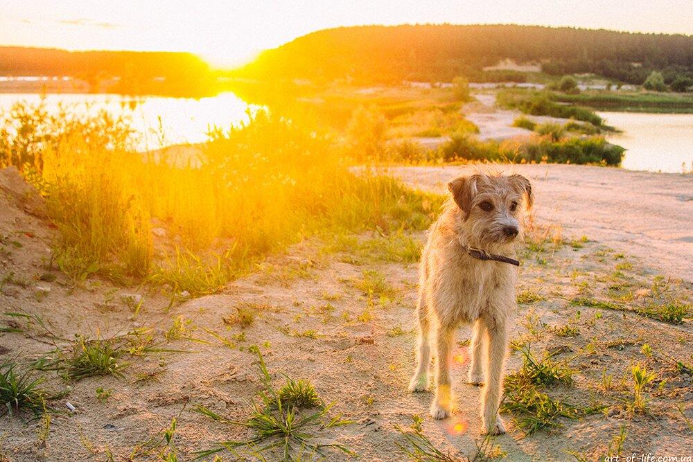Історія про маленьку собачку, яка змінила моє життя